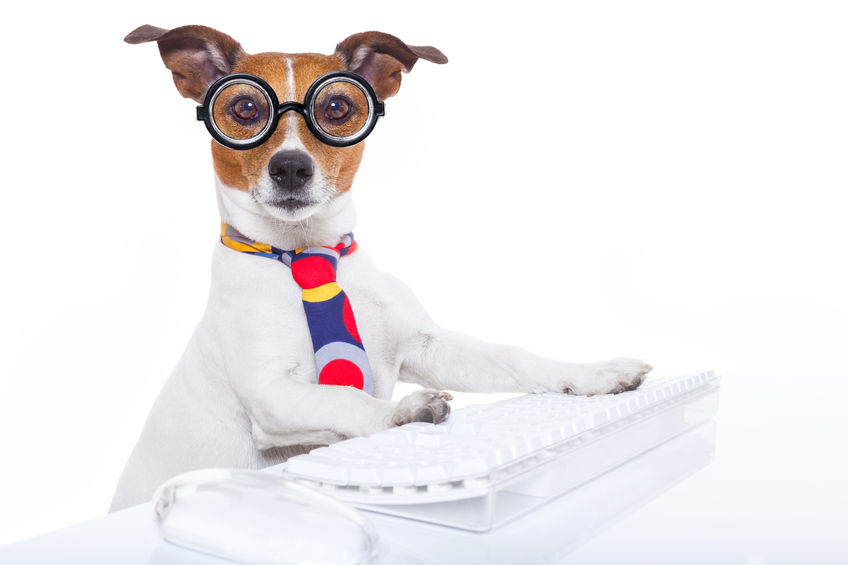 Outsourcing to contact Centers - image of business dog