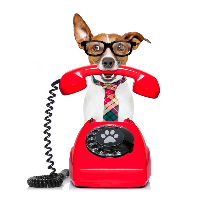 Brand voice - Dog answering phone